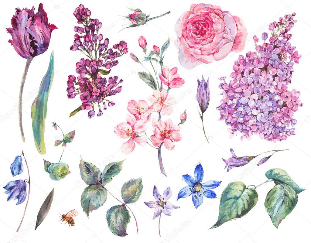 Spring floral set of vintage watercolor pink roses, leaves, bloo