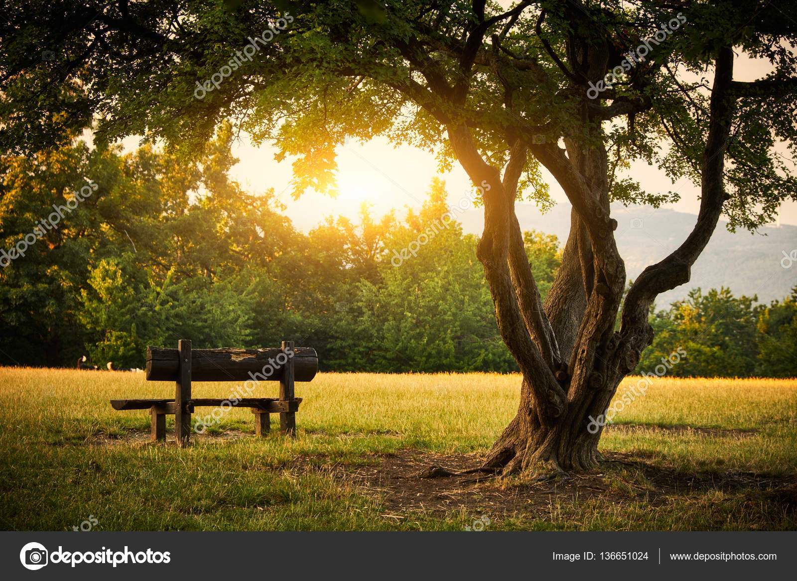 Bench In A Park Stock Photo C Linux1987 136651024