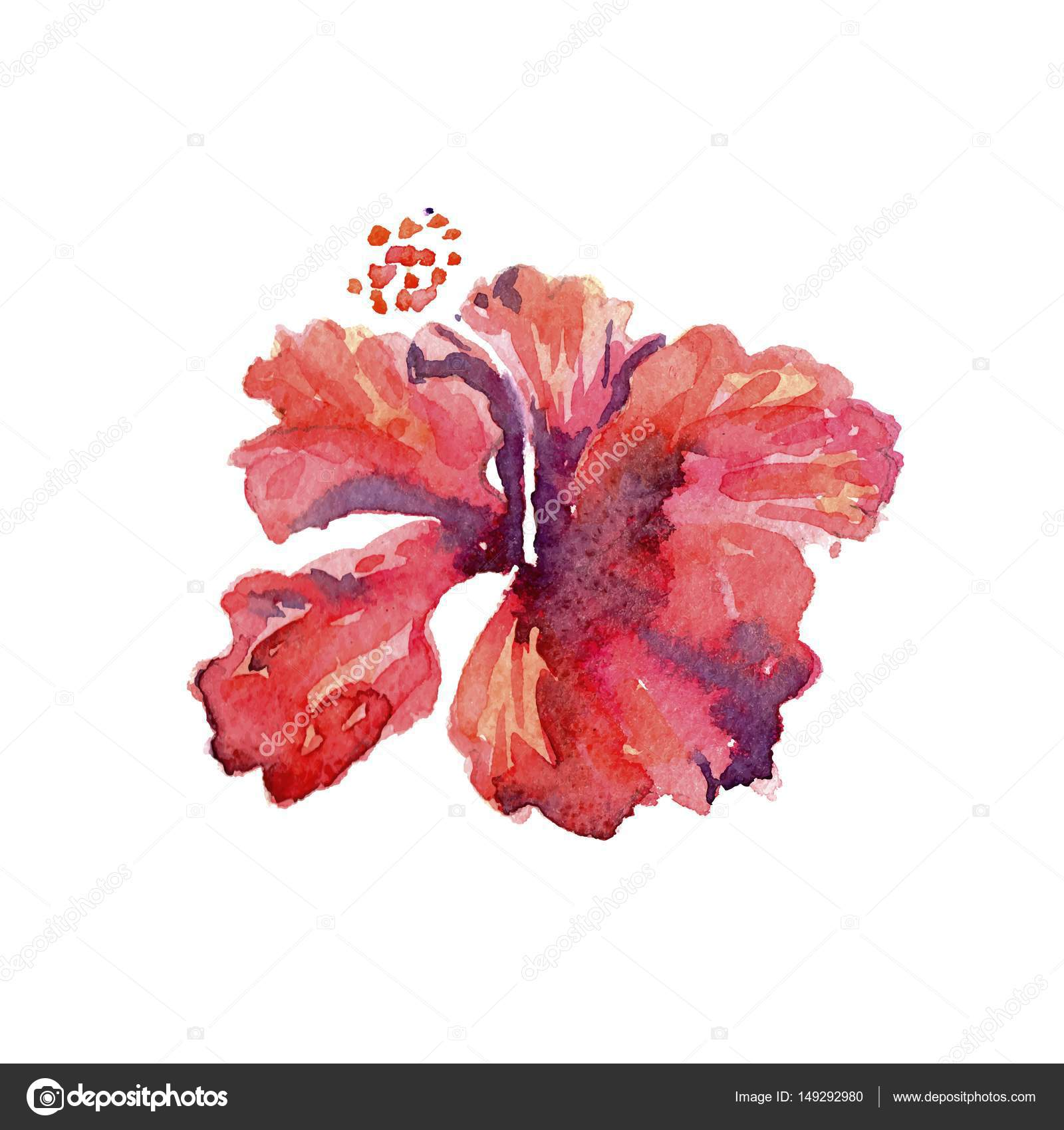 Red hibiscus flower watercolor tropical leaves isolated — Stock ...