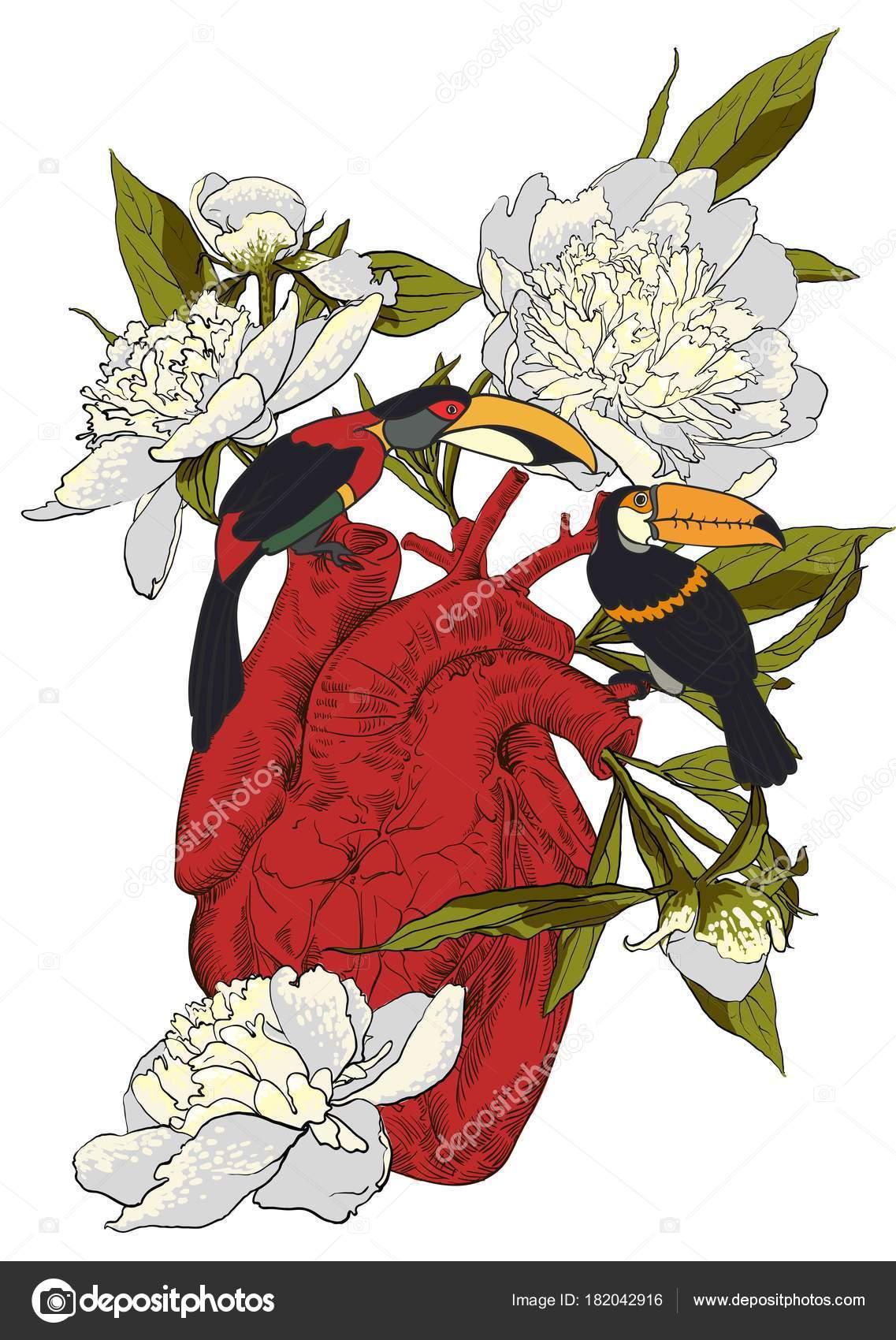 Coeur Humain Avec Des Fleurs Image Vectorielle Mamziolzi C 182042916