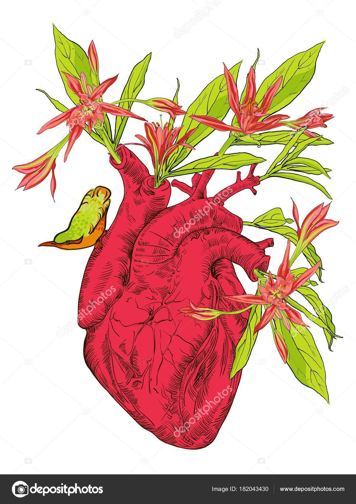 Coeur Humain Avec Des Fleurs Image Vectorielle Mamziolzi C 182043430