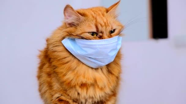 Rote Katze in einer medizinischen Maske vor einem Virus. COVID-19 Schutzanzug für Kätzchen. Orangefarbene Katze ist vor Coronavirus 2020 geschützt. Fette rothaarige Katze beim Versuch, die Maske abzulegen. Der durchschnittliche Plan.