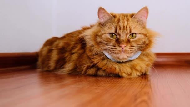 Červená kočka s lékařskou maskou z viru. Ochranný obvaz COVID-19 pro koťata. Oranžová kočka je chráněna před koronavirem v roce2020. Maska na krku zrzavé kočky. Ležel na laminátové podlaze.