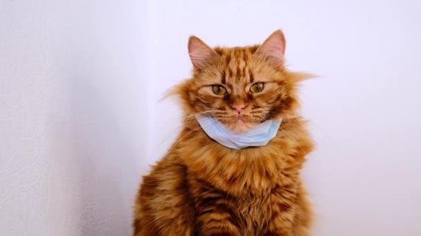 Rote Katze mit einer medizinischen Maske vor dem Virus. COVID-19 Schutzanzug für Kätzchen. Orangefarbene Katze ist vor Coronavirus 2020 geschützt. Die Maske auf dem Hals einer dicken Rotschopf-Katze. Weißer Hintergrund