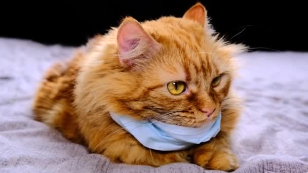 Red cat with a medical mask from the virus. COVID-19 protective dressing for kittens. Orange cat is protected from coronavirus disease 2020. The mask on the neck of a fat red cat lies on the bed.