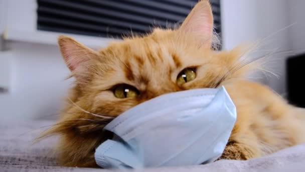 Rote Katze in einer medizinischen Maske vor einem Virus. COVID-19 Schutzanzug für Kätzchen. Orangefarbene Katze ist vor Coronavirus 2020 geschützt. Eine dicke Ingwerkatze liegt auf einer Decke im Bett. Nahaufnahme