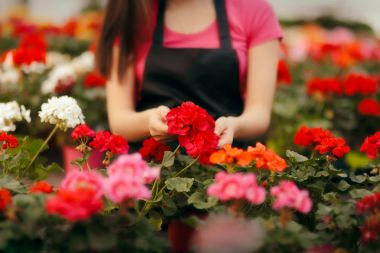 Greenhouse Worker Hands Caring for Plants