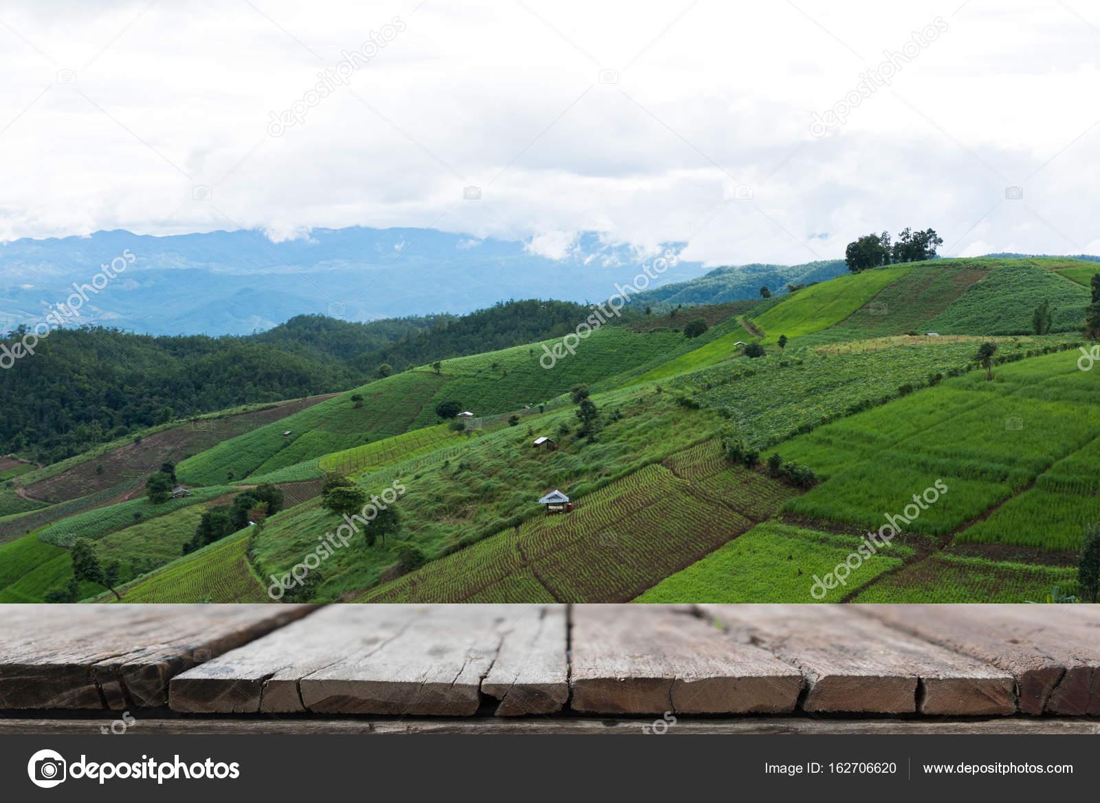 Industria Valle Verde Campo De Arroz Verde En Terraza En
