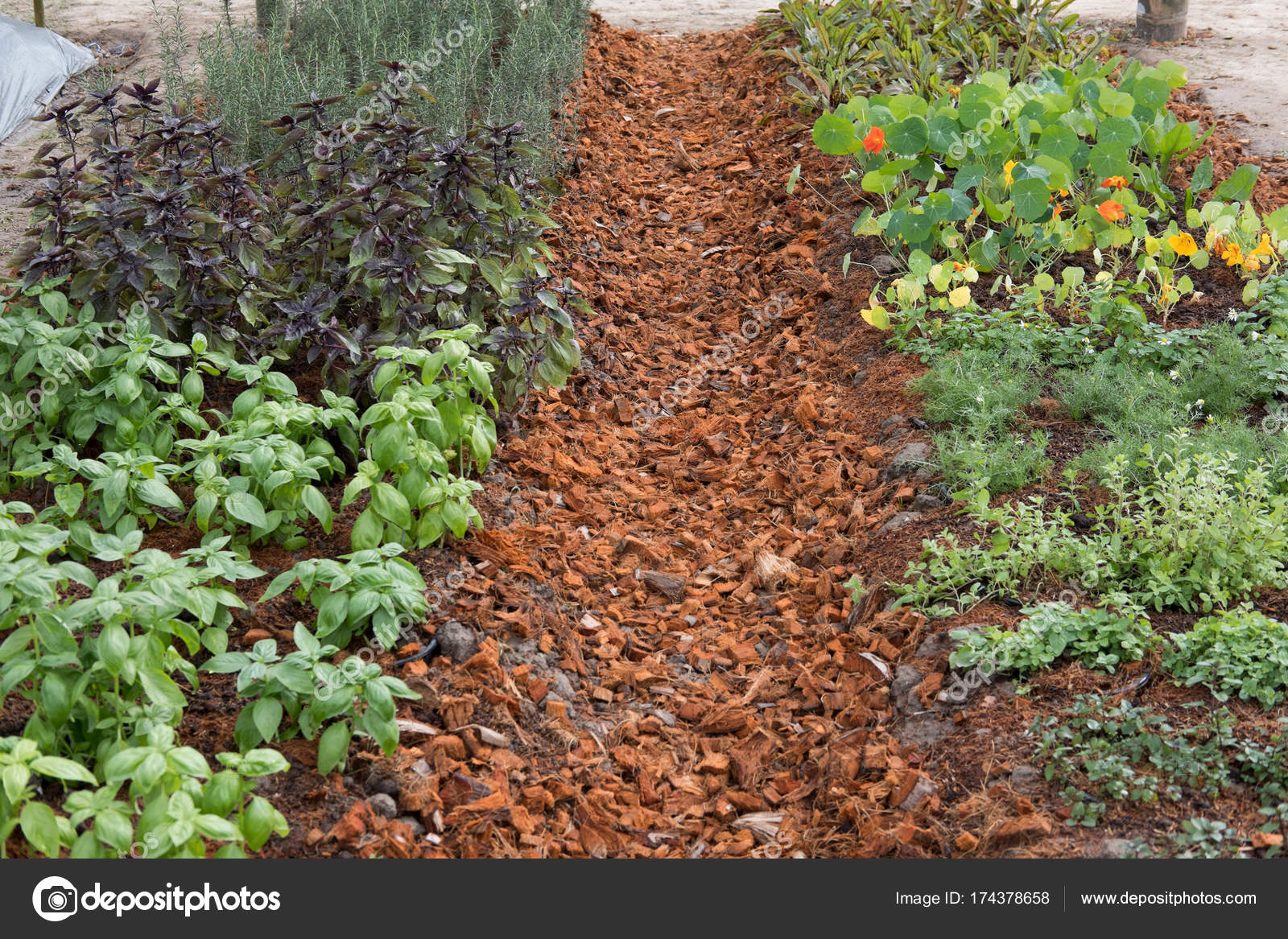 plant growing in vegetable garden. soil cultivation. Agricultura ...
