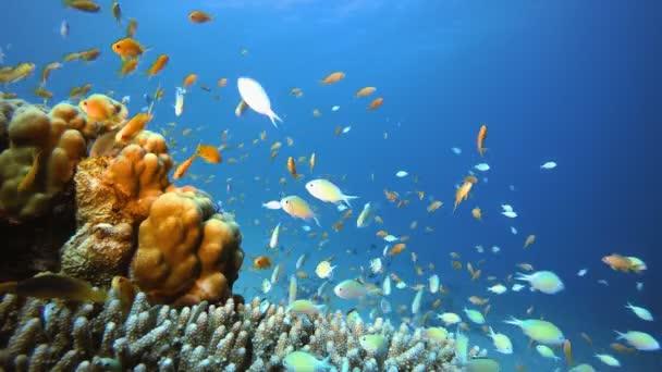Modré moře Voda a barevné ryby
