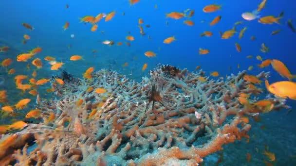Víz alatti színes trópusi halak