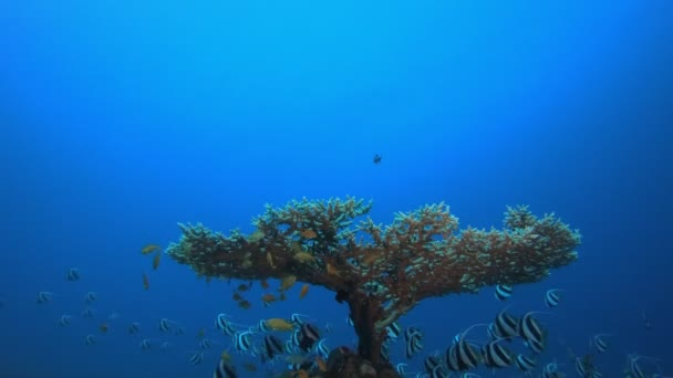 Modré moře Vodní prapor-ryby