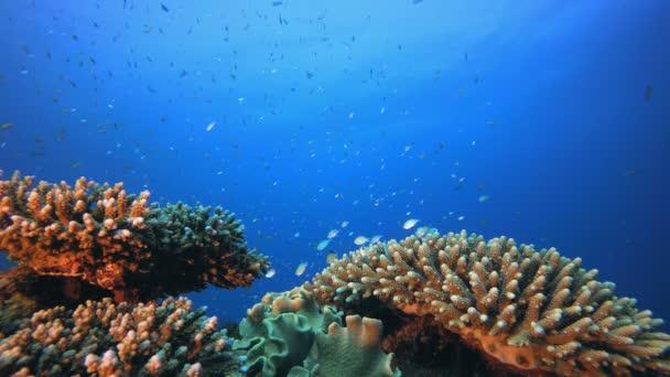 Mořské korálové útesy