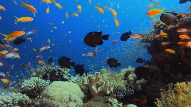 Underwater Fish on Vibrant Coral Garden