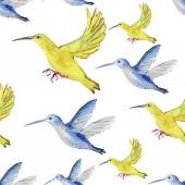Akvarell színes kolibri - colibri illusztráció. Varratmentes háttérben.