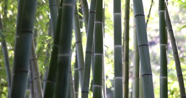 Dolní-up Pan přes bambusové stromy v botanické zahradě.