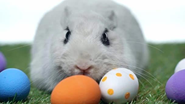 selektiver Fokus von Kaninchen in der Nähe von Ostereiern isoliert auf Weiß