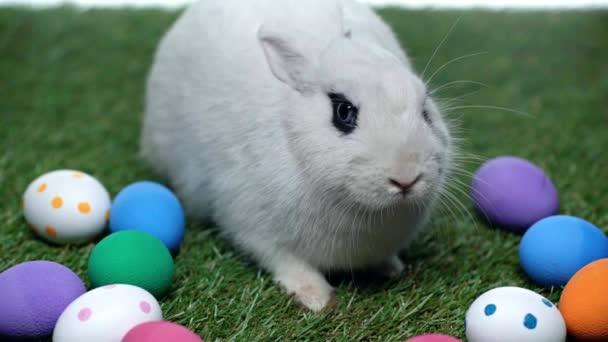 Niedliche Kaninchen in der Nähe von Ostereiern auf Gras