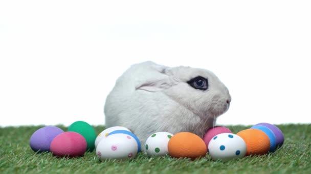 nyúl közel húsvéti tojás fű elszigetelt fehér