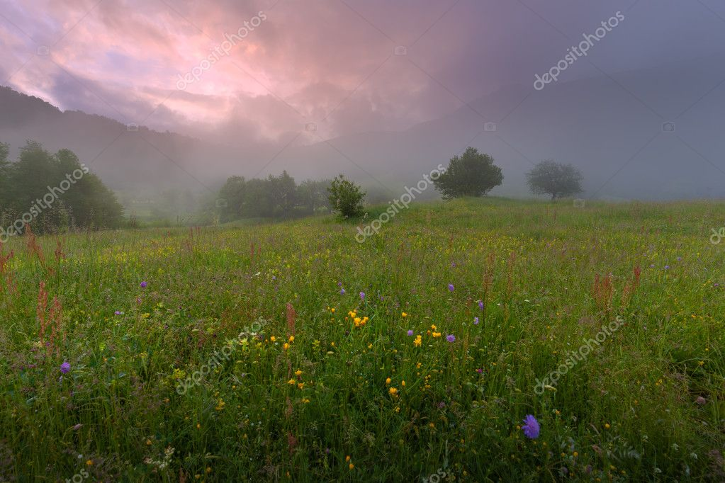 Foggy landscape on idyllic flower field at dawn