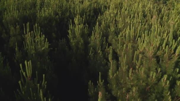 přeletět nad zeleným lesem nad vrcholky stromů krásné přírodní krajiny natáčení z dronu