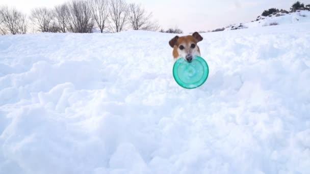 Roztomilý hry běžící pes. Zpomalené video záběrů