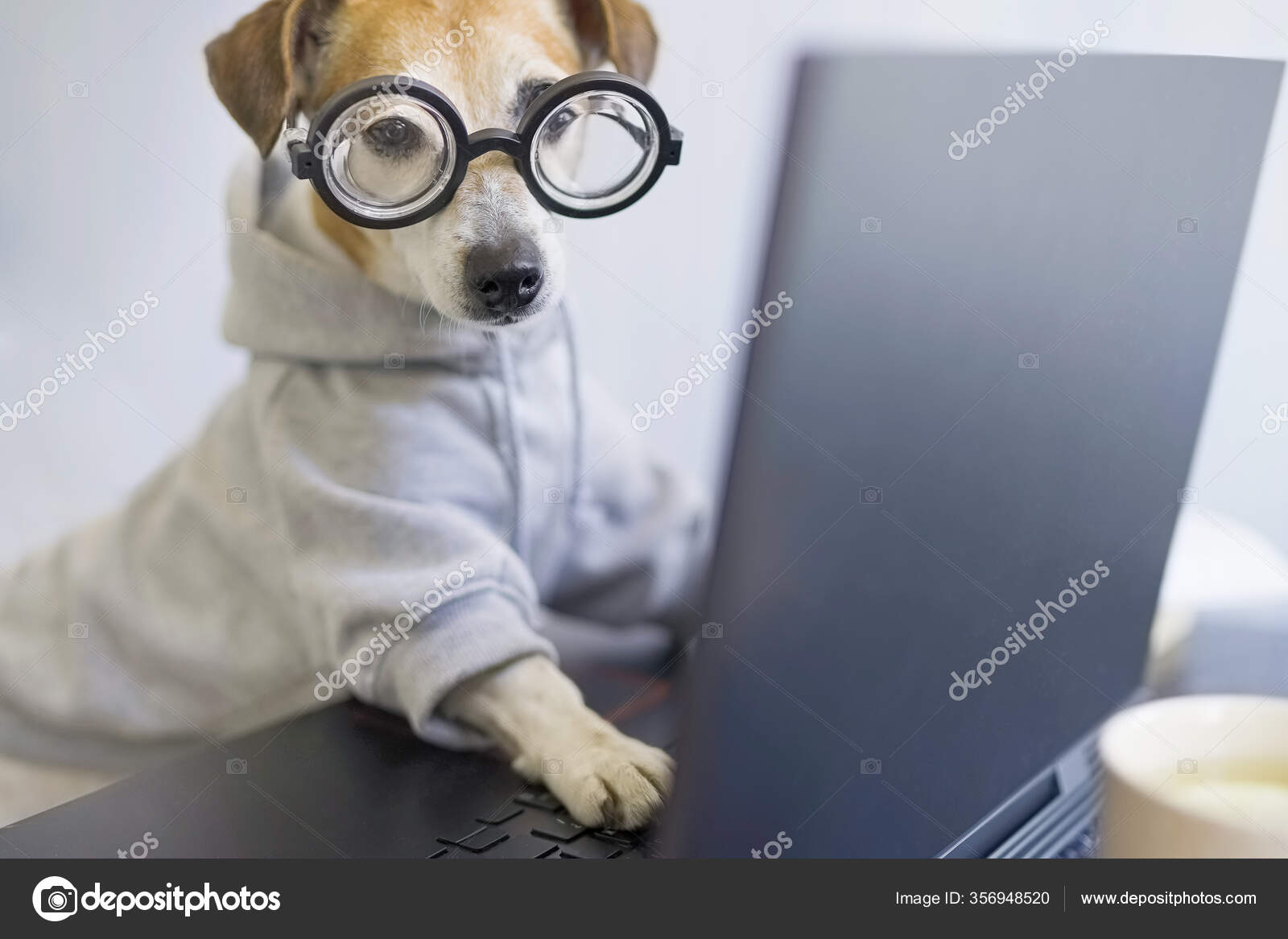 Smart Dog Glasses Working Computer Wearing Sporty Stylish Hoodie Freelancer Stock Photo C Flydragonfly 356948520,Hacks Space Saving Ideas For Small Apartments