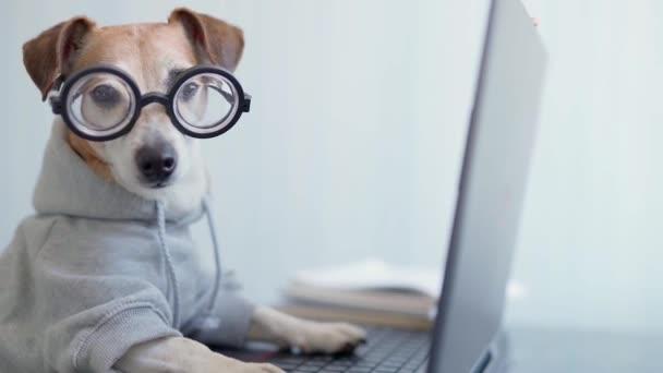 Chytrý pes používající počítač. Vtipný mazlíček v šedém svetru a nerd brýle psaní na klávesnici notebooku. Život na volné noze, práce z domova. karanténa Společenské distancování. Vertikální video záznam