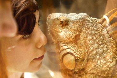 boy with iguana lizard through the glass in zoo