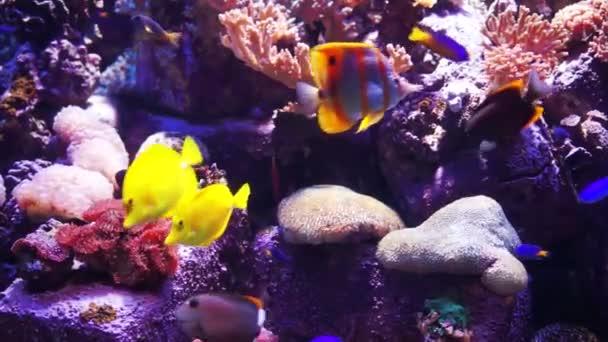 Akvárium nebo oceanárium, Fish Tank, korálový útes, zvířata.