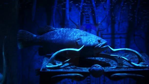 Fish In A Big Aquarium And Oceanarium Fish Tank