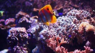 Image of: Funny Animal Aquarium Or Oceanarium Fish Tank Coral Reef Animals Stock Video Pinterest Round Fish Tank Stock Videos Royalty Free Round Fish Tank Footages