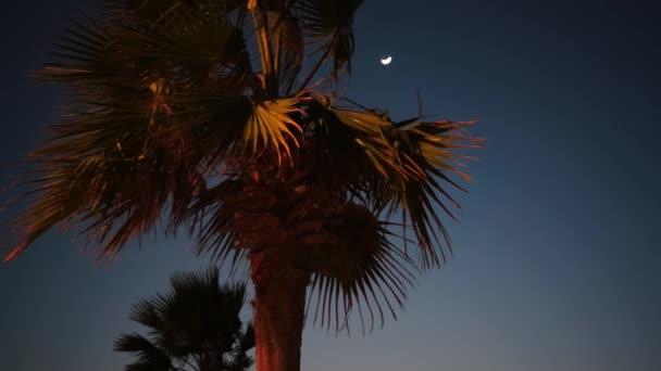 Palme bei Nacht und Mond auf dem Hintergrund.