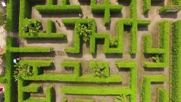 Green maze garden background — Stock Video © Naypong #164242550