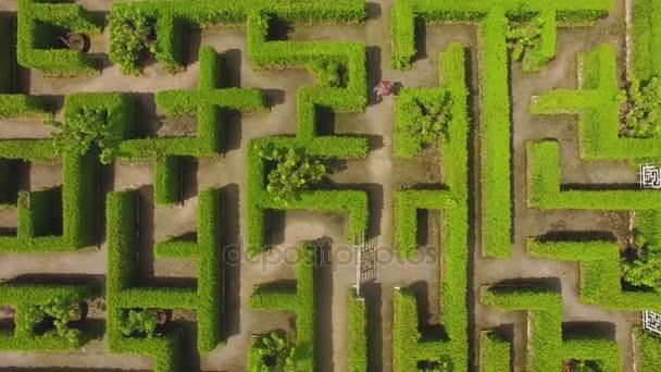 Green maze garden background