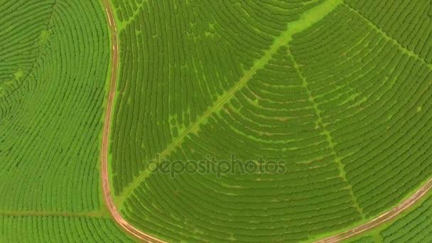 Luftaufnahme der Teeplantage, aufgenommen von einer Drohne