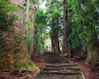 Pathway in the forest at Kumano Kodo Daimonzaka Slope in Wakayama, Japan
