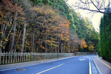 Asphalt road with beautiful japanese maple trees in autumn season in Koyasan, Japan