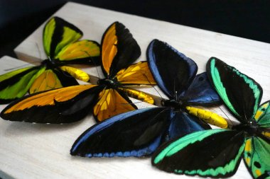 Exotic butterflies spread in a colourful composition