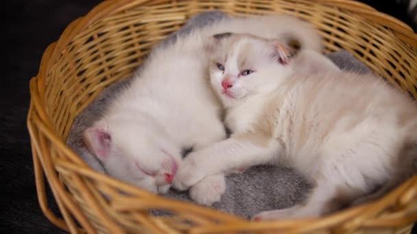 Dvě roztomilá koťátka spí v košíku