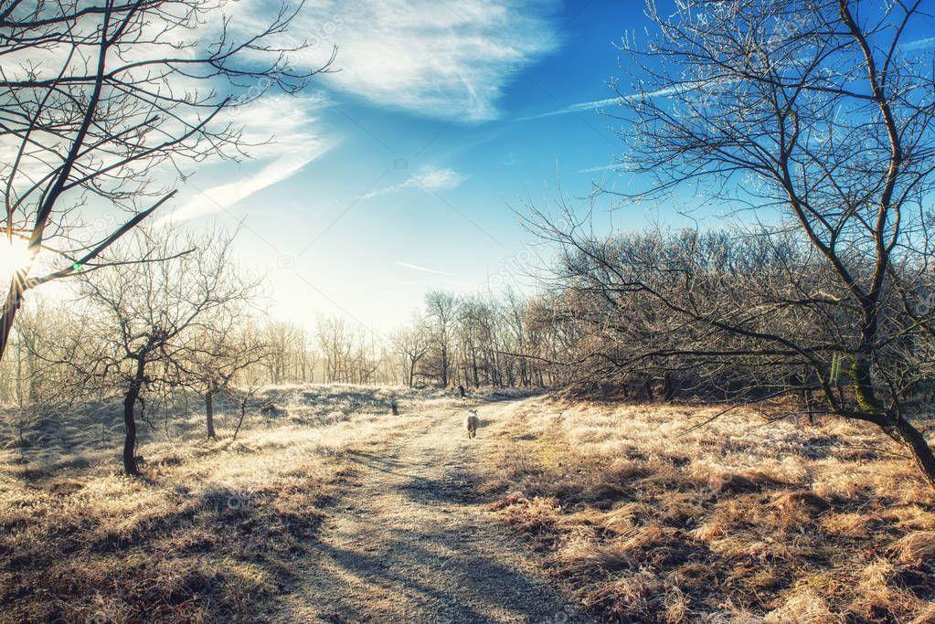 Nature Backgrounds, Scottish Blackface Sheep