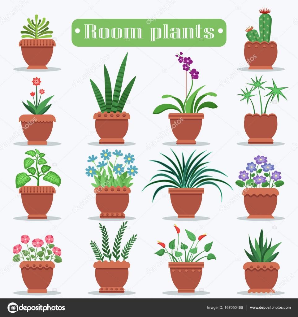 Im genes plantas decorativas plantas decorativas de la for Plantas decorativas tipos