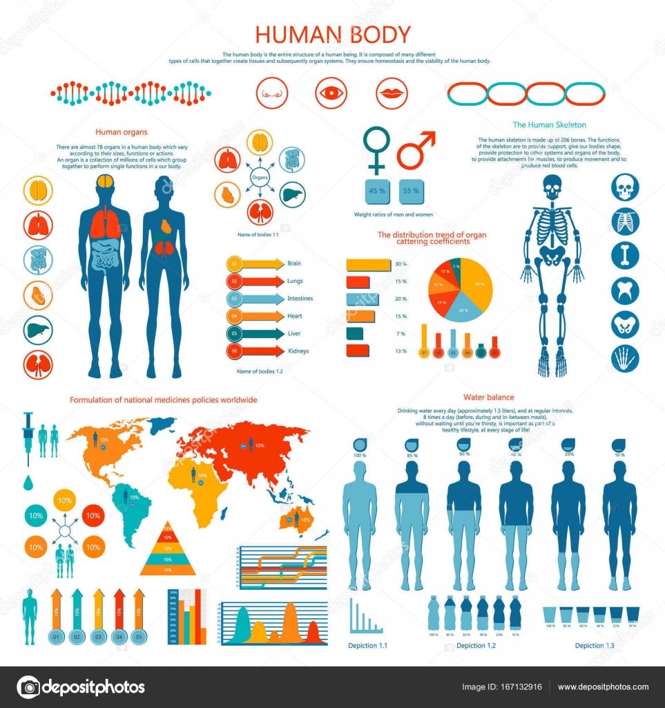Konzept des menschlichen Körpers farbigen Infografik Cartoon ...