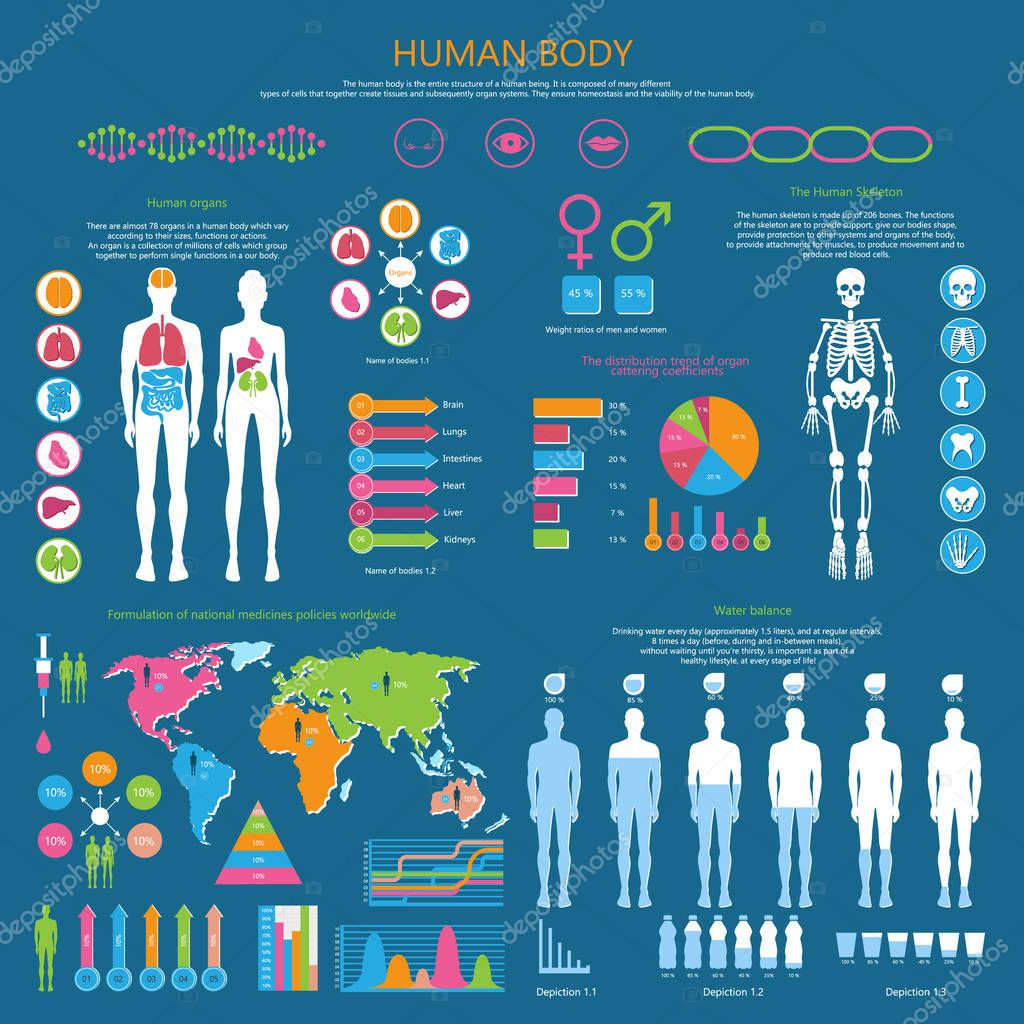 Human Body Detailed Infographic with Statistics