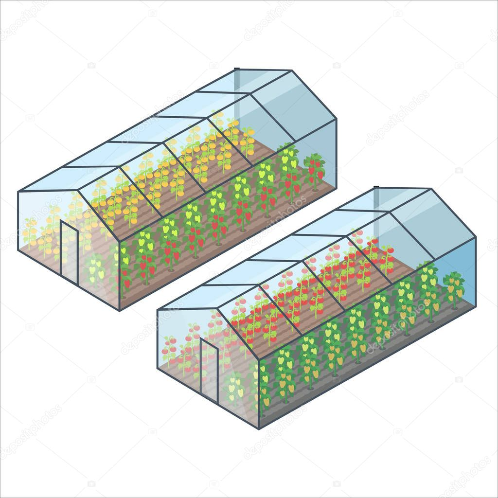 Big Transparent Greenhouses with Vegetables Beds