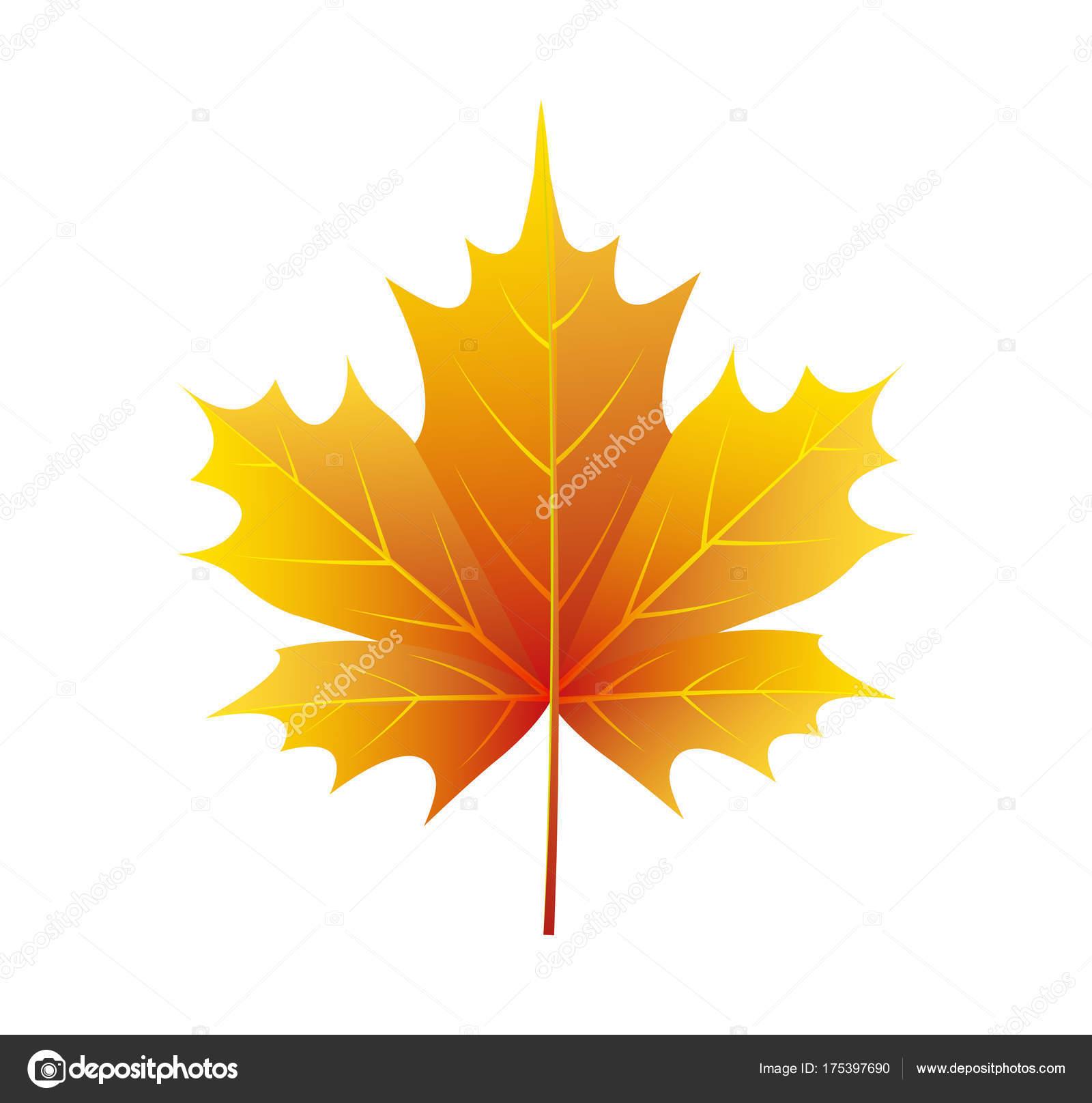 Кленовый лист осень картинка