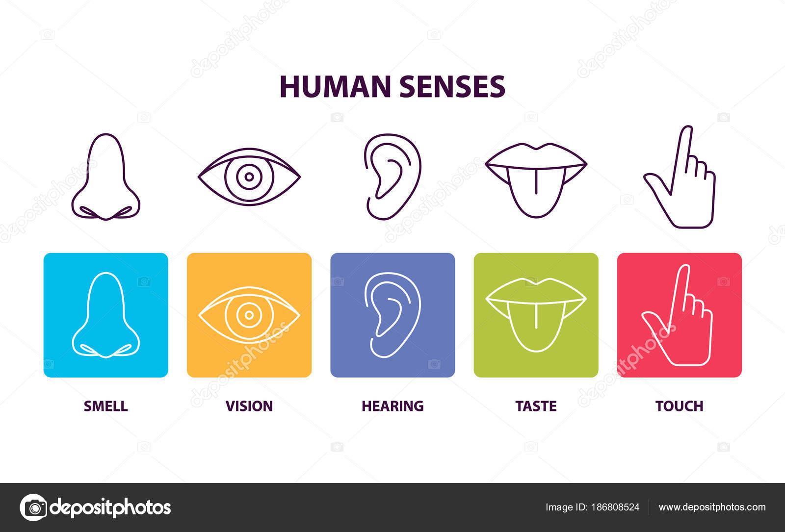 Menschlichen Sinne Informative Poster mit Körperteilen — Stockvektor ...
