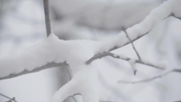 Äste im Schnee im Winter.