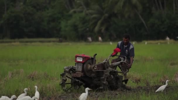 Pracujte na poli na traktoru. Srí Lanka.