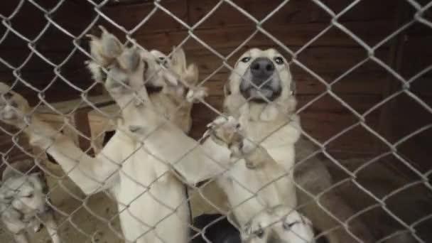 Obdachlose Hunde in einem Tierheim. Zeitlupe
